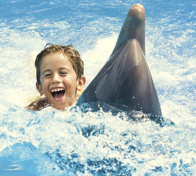 Nada con delfines